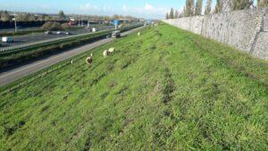 Stuk grond langs de A12